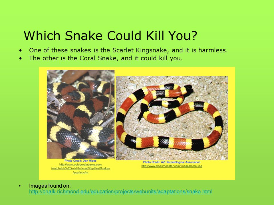 Which Snake Could Kill You