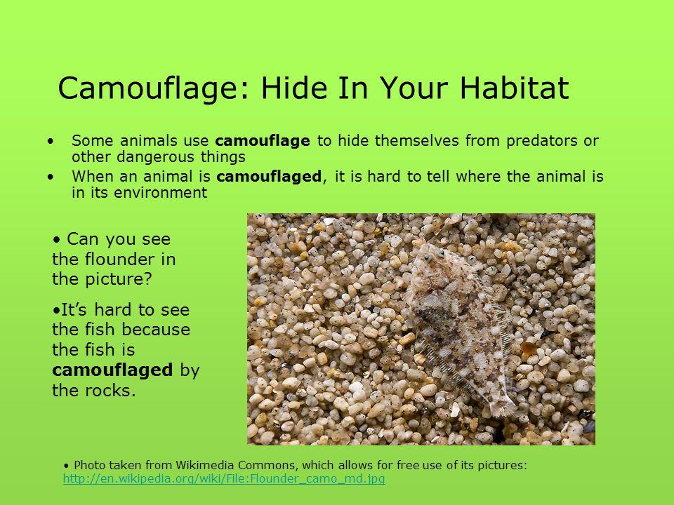 Camouflage: Hide In Your Habitat