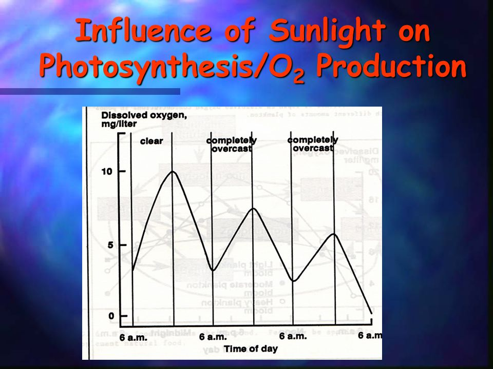 Influence of Sunlight on Photosynthesis/O2 Production