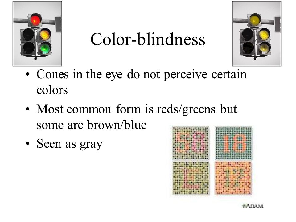 Color-blindness Cones in the eye do not perceive certain colors