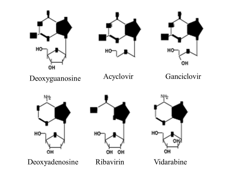 Acyclovir Ganciclovir Deoxyguanosine Deoxyadenosine Ribavirin Vidarabine