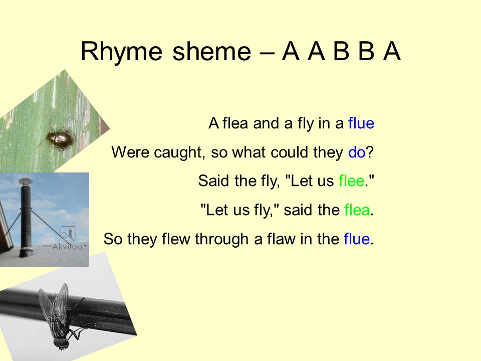 Rhyme sheme – A A B B A A flea and a fly in a flue