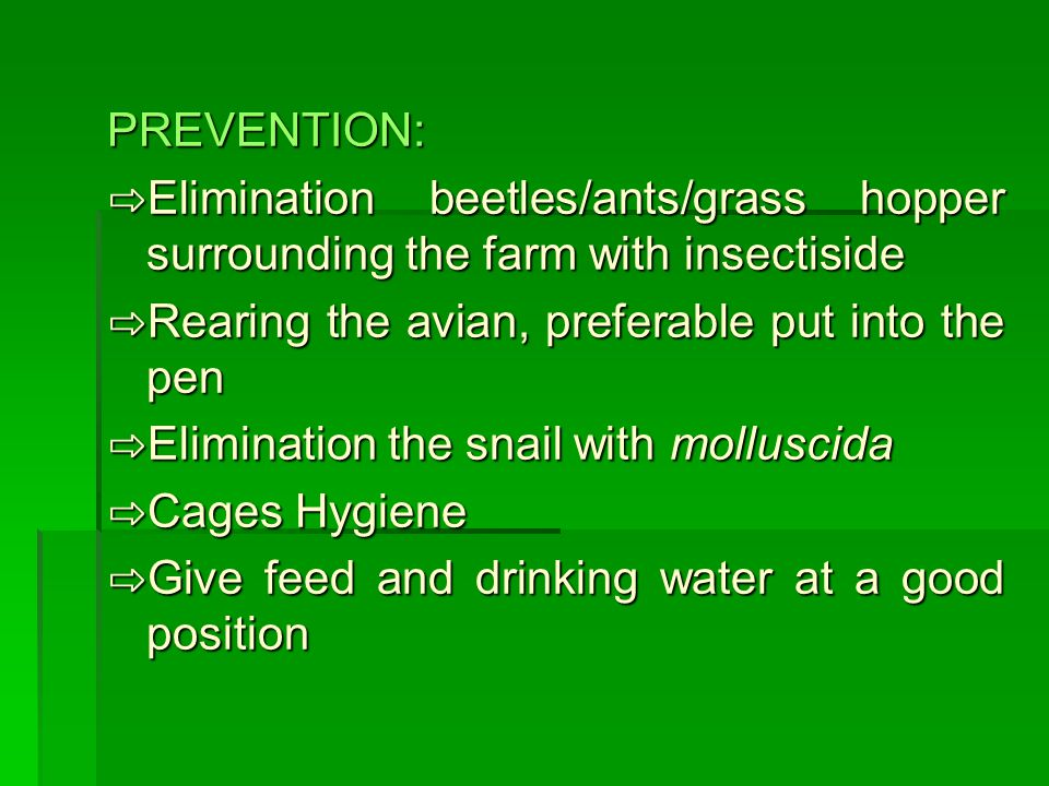 PREVENTION: ⇨Elimination beetles/ants/grass hopper surrounding the farm with insectiside. ⇨Rearing the avian, preferable put into the pen.