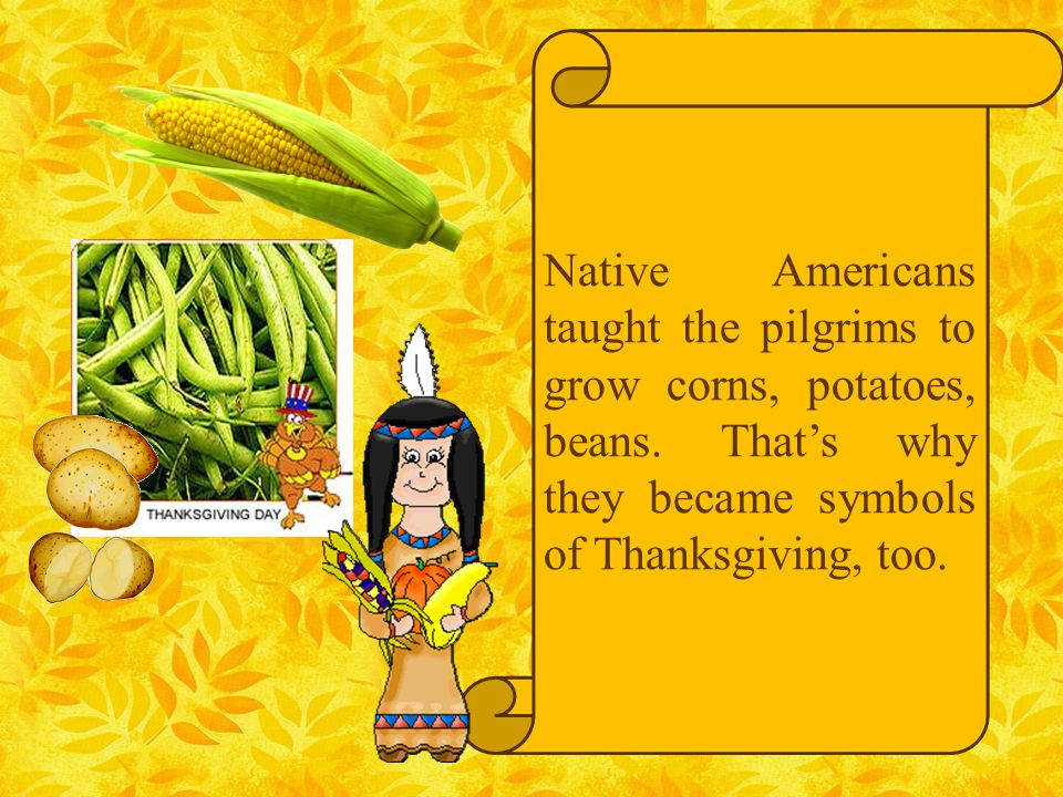 Native Americans taught the pilgrims to grow corns, potatoes, beans