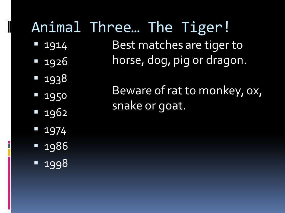 Animal Three… The Tiger!