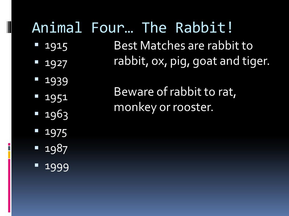 Animal Four… The Rabbit!