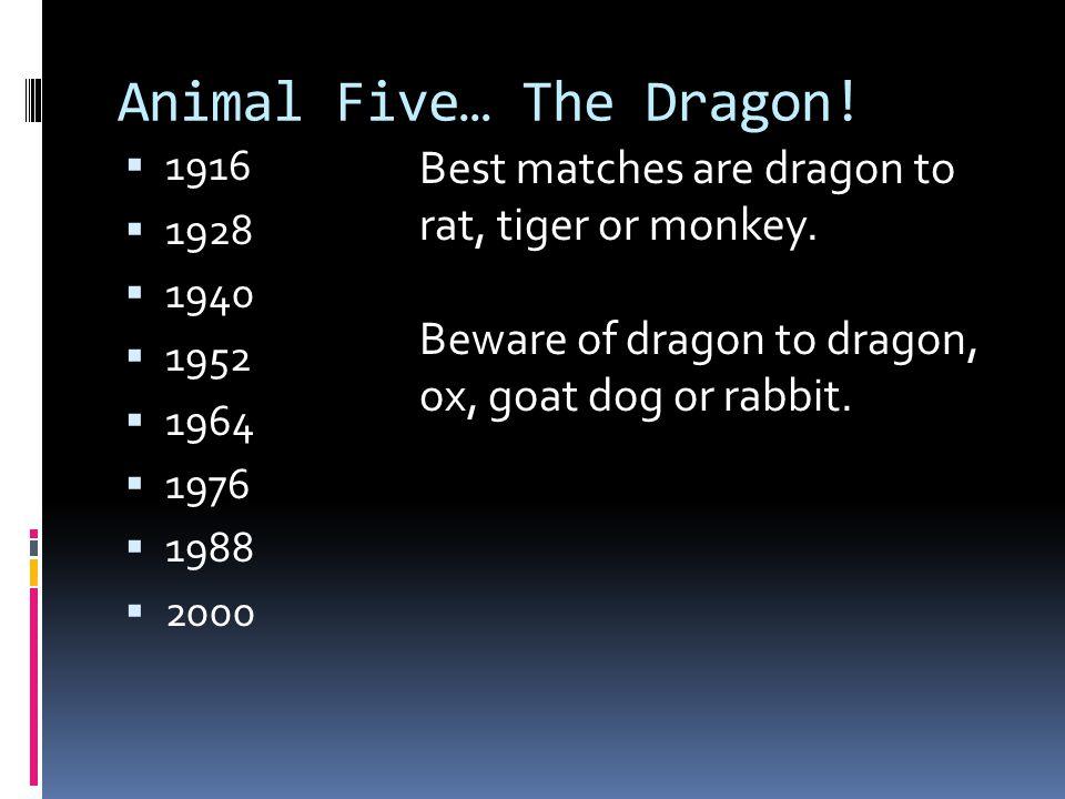 Animal Five… The Dragon!
