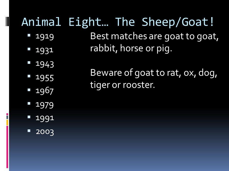 Animal Eight… The Sheep/Goat!