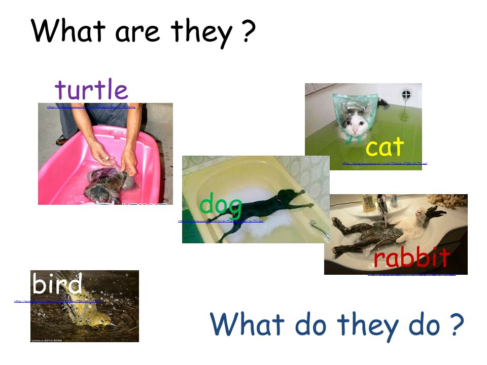 What are they What do they do turtle cat dog rabbit bird