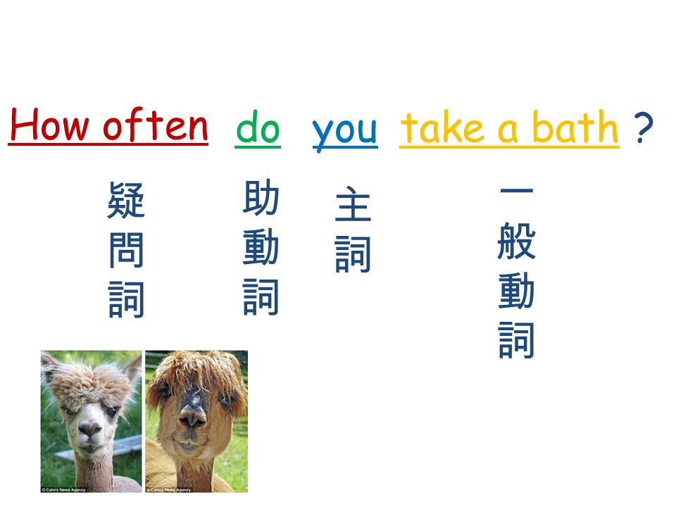 How often do you take a bath 疑 問 詞 助 動 詞 主 詞 一 般 動 詞