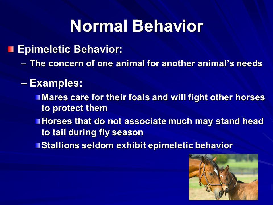 Normal Behavior Epimeletic Behavior: Examples: