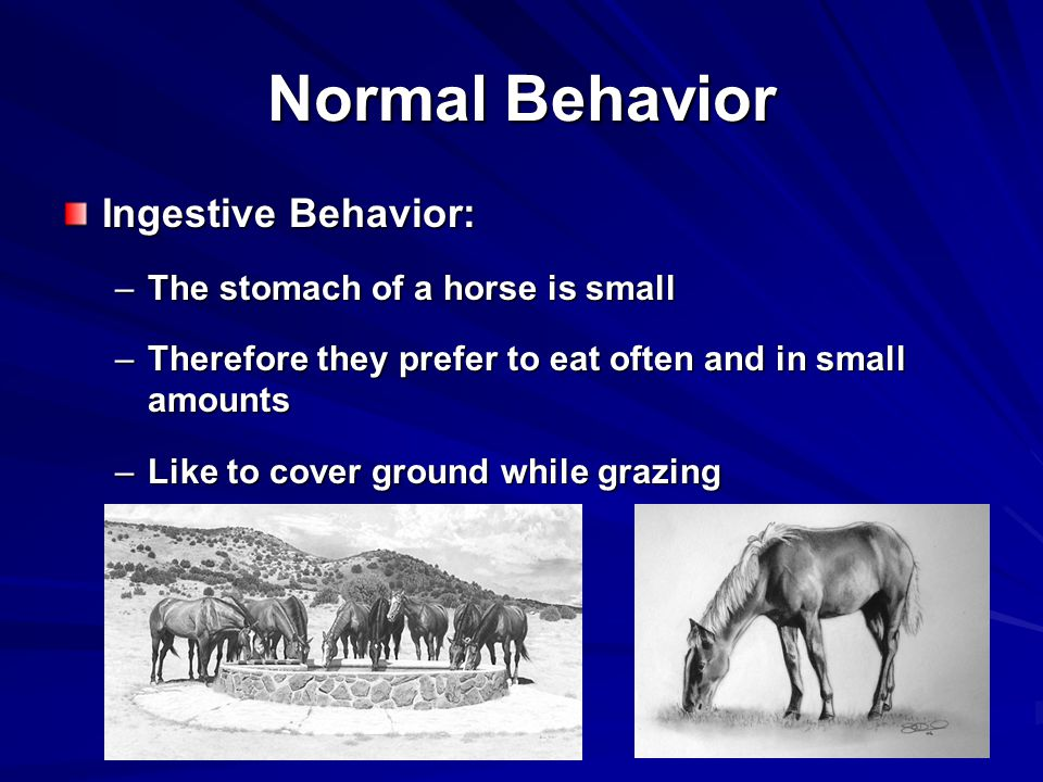 Normal Behavior Ingestive Behavior: The stomach of a horse is small