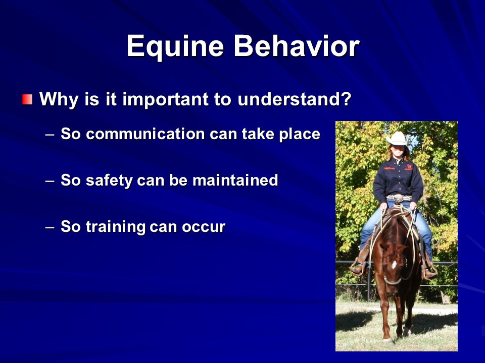 Equine Behavior Why is it important to understand