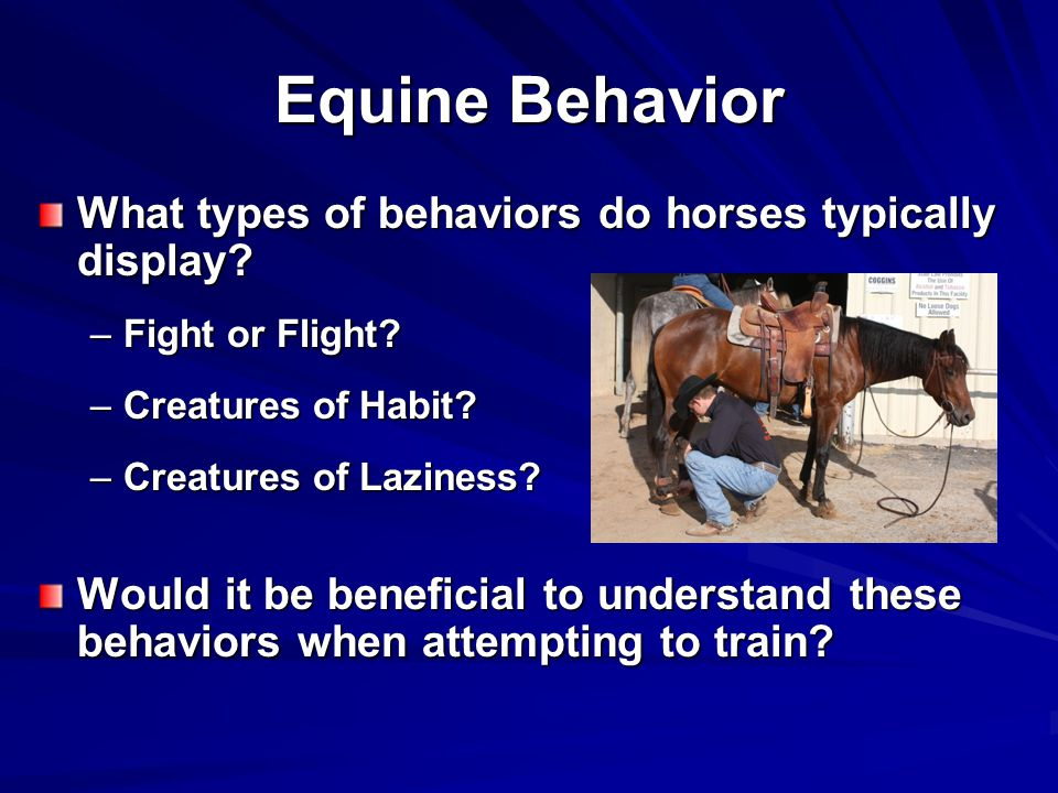 Equine Behavior What types of behaviors do horses typically display