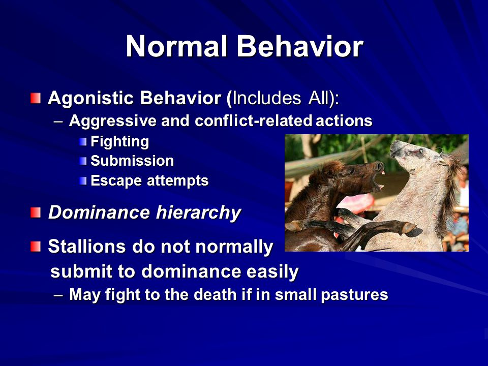 Normal Behavior Agonistic Behavior (Includes All): Dominance hierarchy