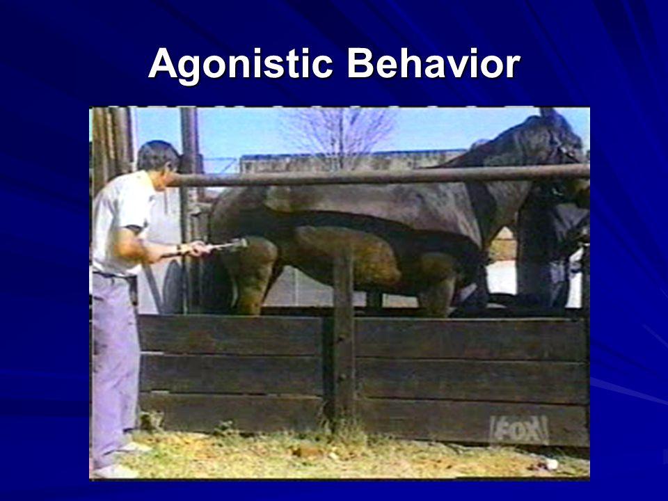 Agonistic Behavior