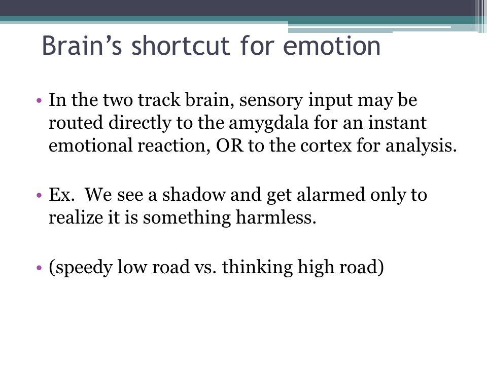 Brain's shortcut for emotion