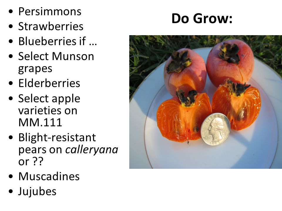 Do Grow: Persimmons Strawberries Blueberries if … Select Munson grapes