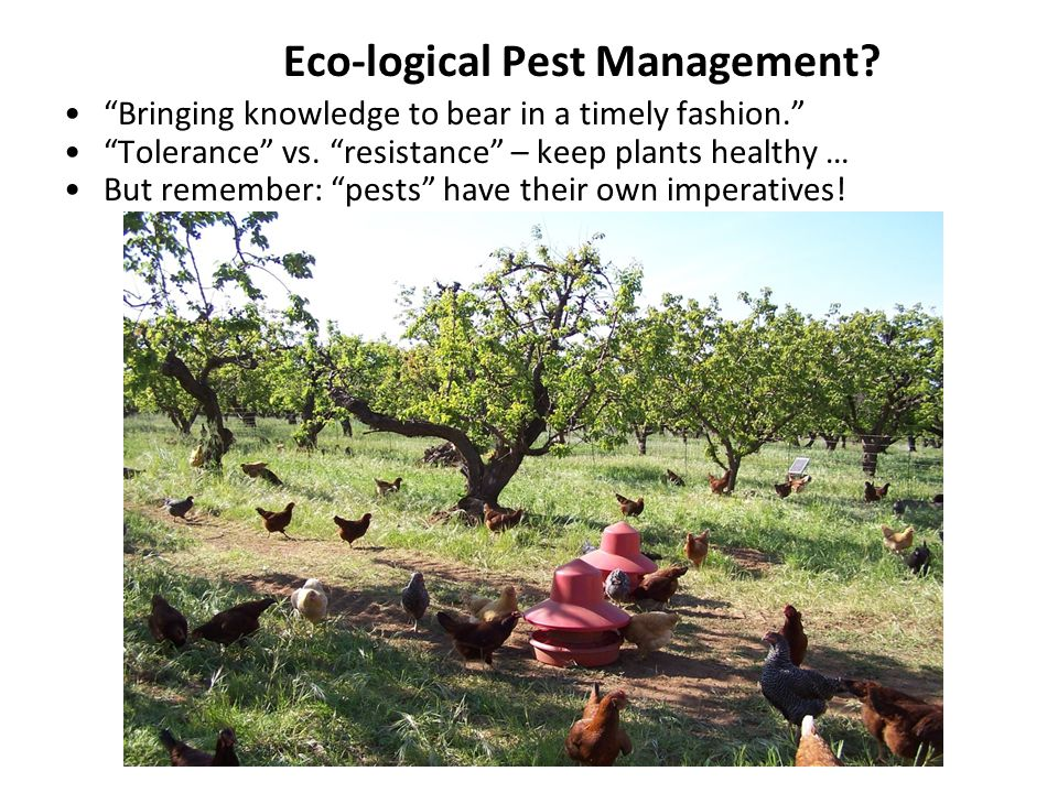 Eco-logical Pest Management