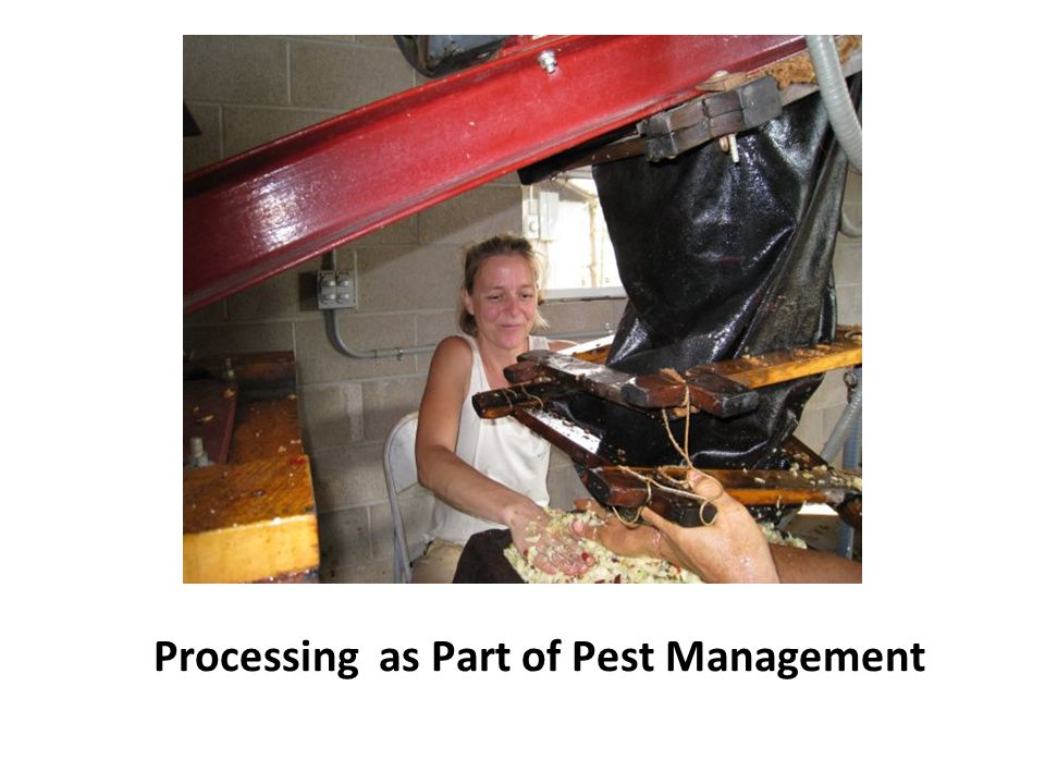Processing as Part of Pest Management