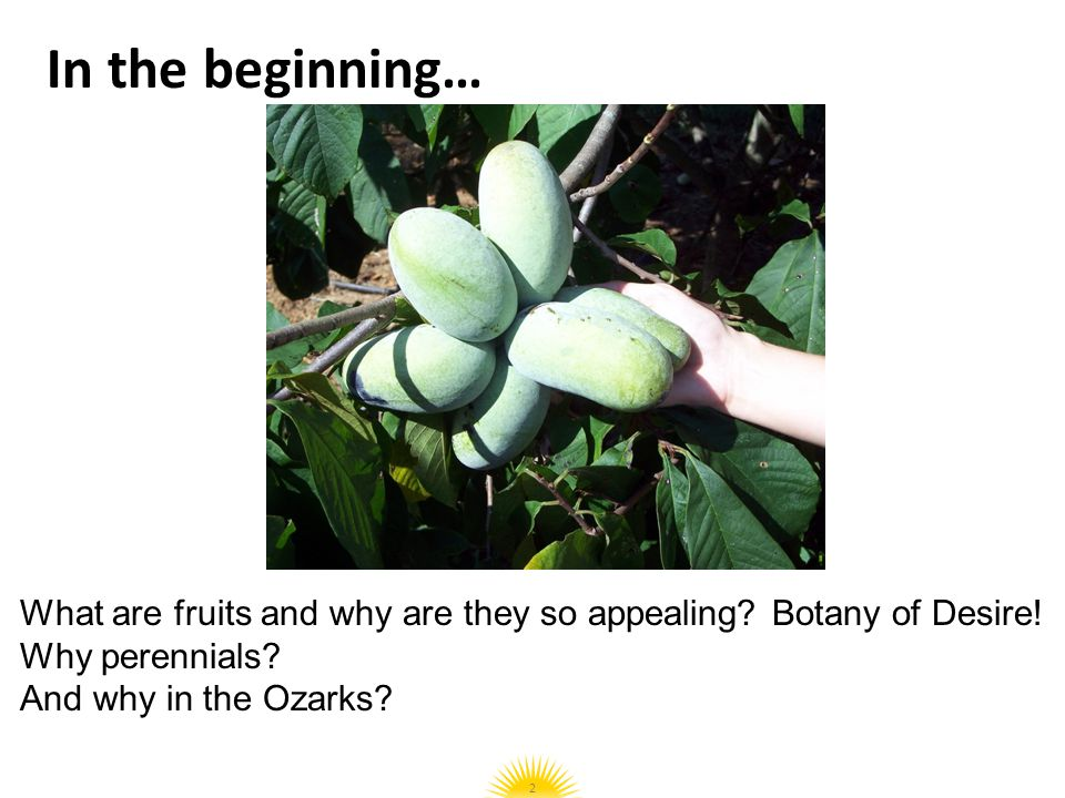 In the beginning… What are fruits and why are they so appealing Botany of Desire! Why perennials