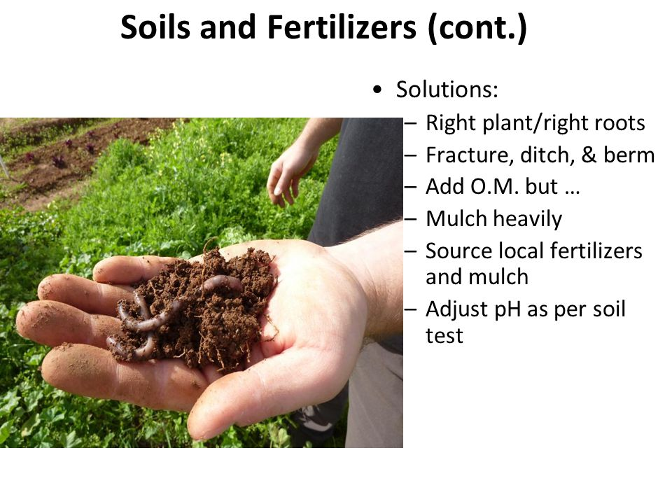 Soils and Fertilizers (cont.)