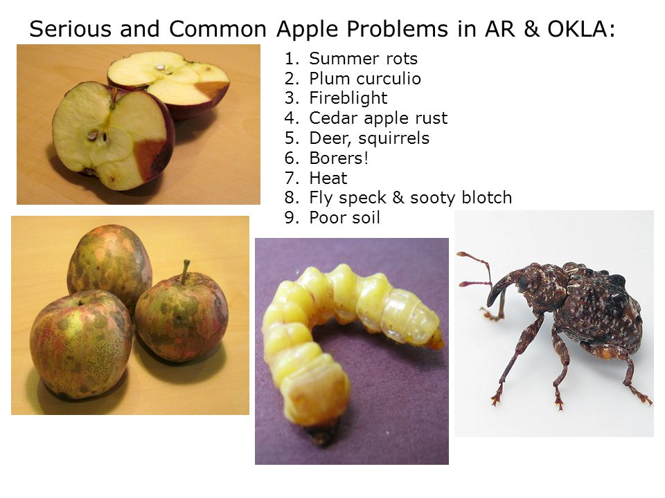 Serious and Common Apple Problems in AR & OKLA: