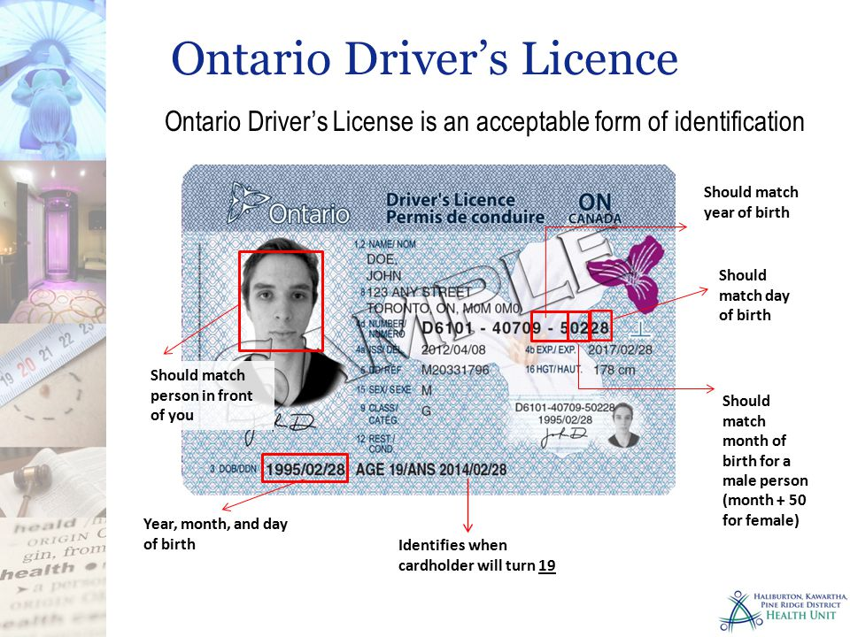 Lost Ontario Drivers License And Health Card - bureauseven