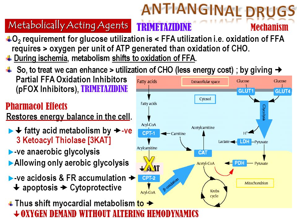 X ANTIANGINAL DRUGS Metabolically Acting Agents TRIMETAZIDINE