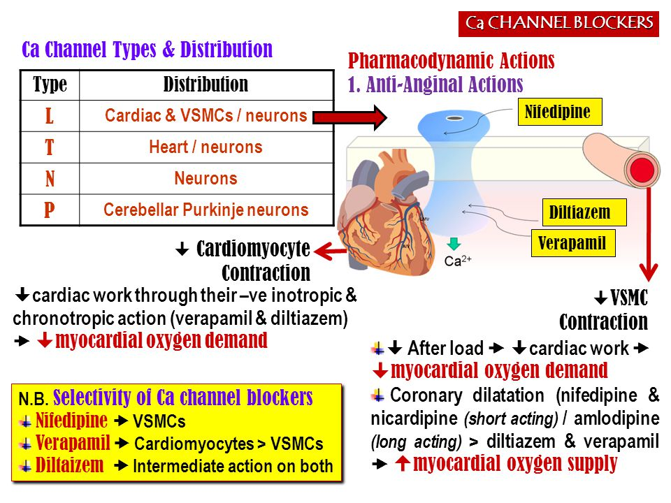 Cardiac & VSMCs / neurons Cerebellar Purkinje neurons