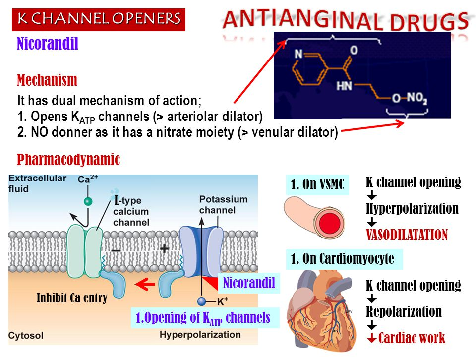 ANTIANGINAL DRUGS K CHANNEL OPENERS Nicorandil Mechanism