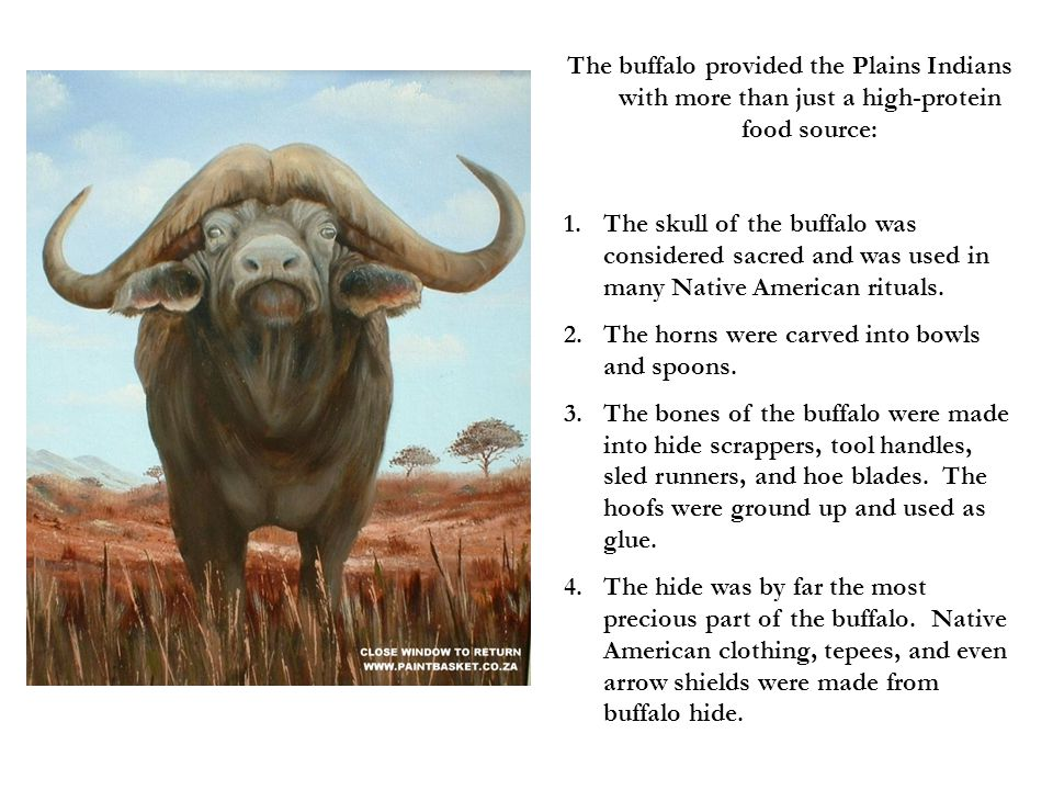 The buffalo provided the Plains Indians with more than just a high-protein food source:
