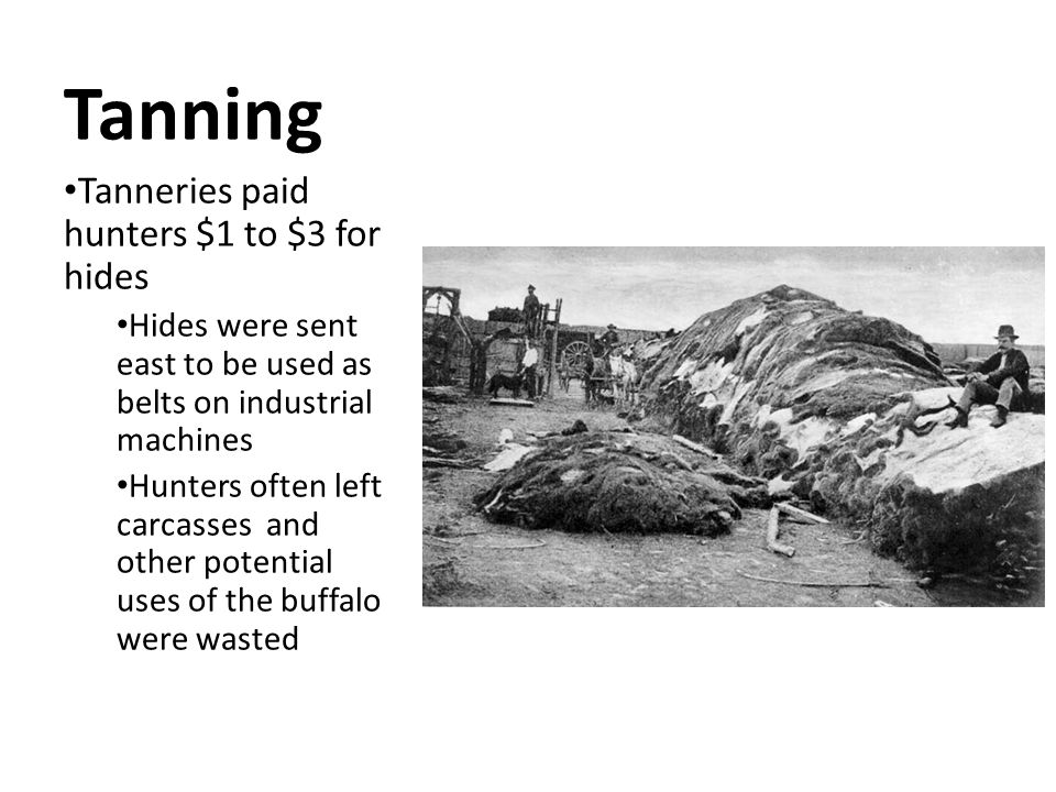Tanning Tanneries paid hunters $1 to $3 for hides