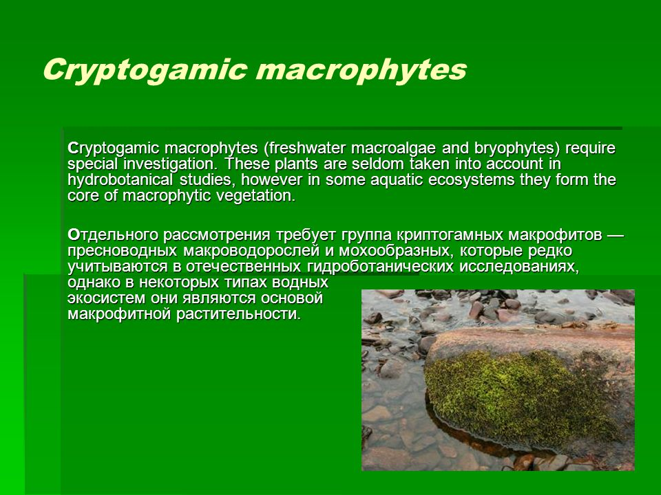 Cryptogamic macrophytes