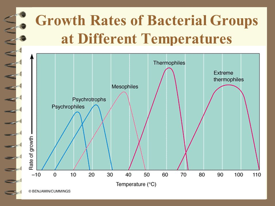 Growth Rates of Bacterial Groups at Different Temperatures