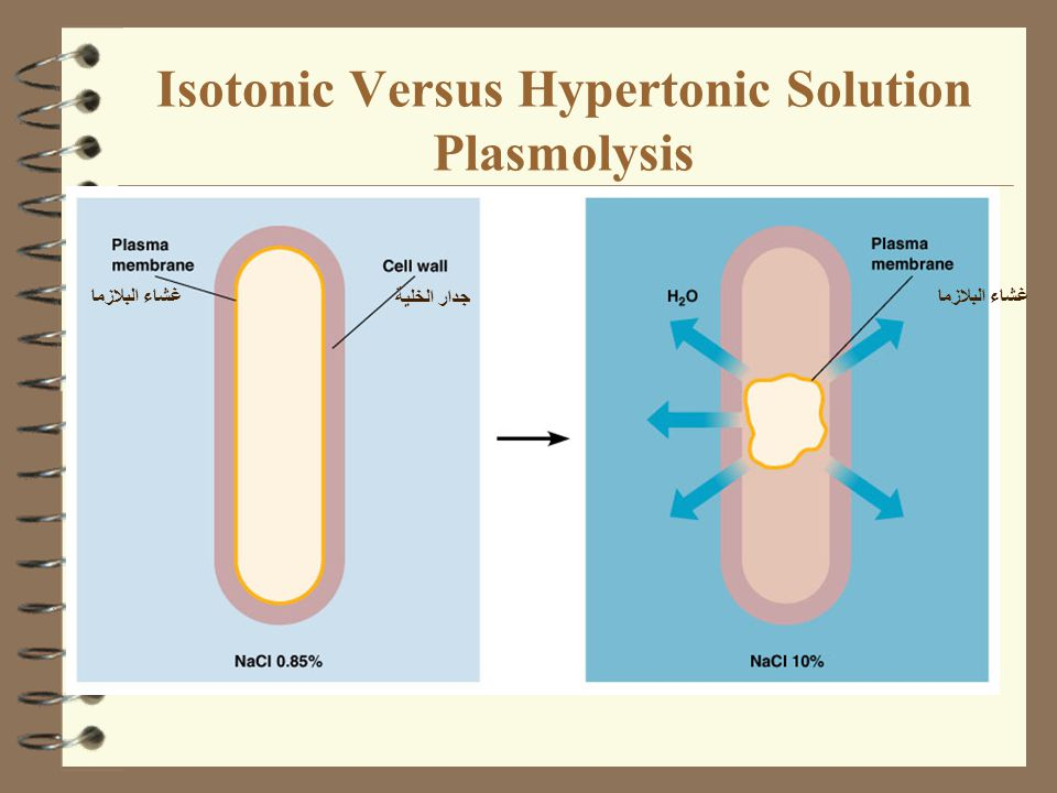 Isotonic Versus Hypertonic Solution Plasmolysis