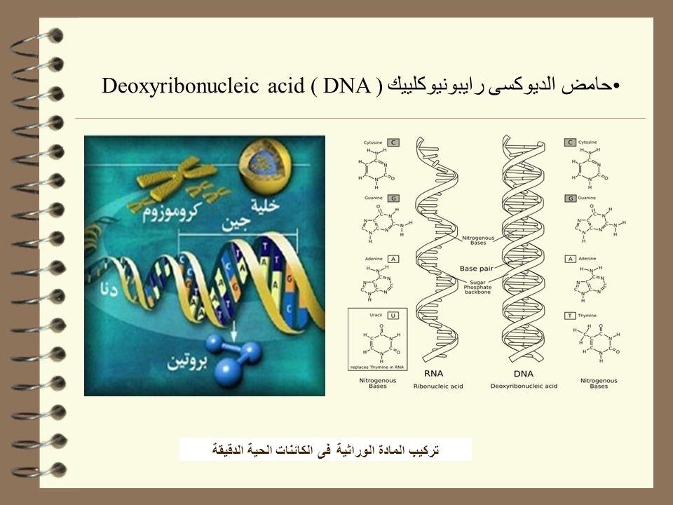 تركيب المادة الوراثية فى الكائنات الحية الدقيقة