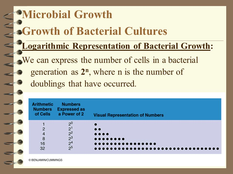 Growth of Bacterial Cultures