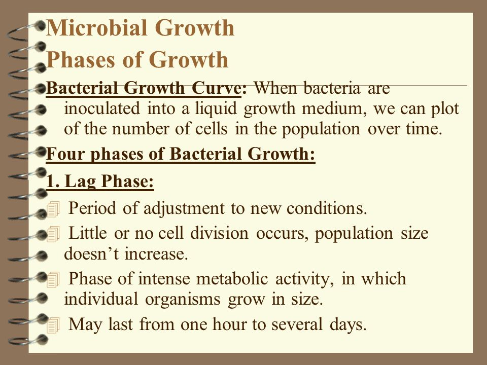 Microbial Growth Phases of Growth