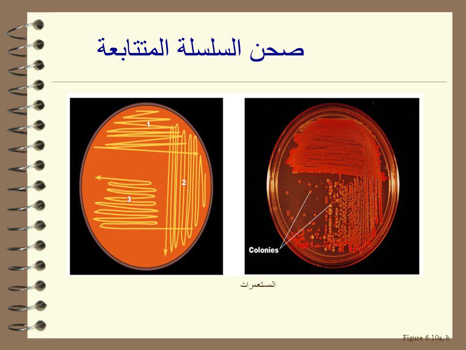 صحن السلسلة المتتابعة المستعمرات Figure 6.10a, b