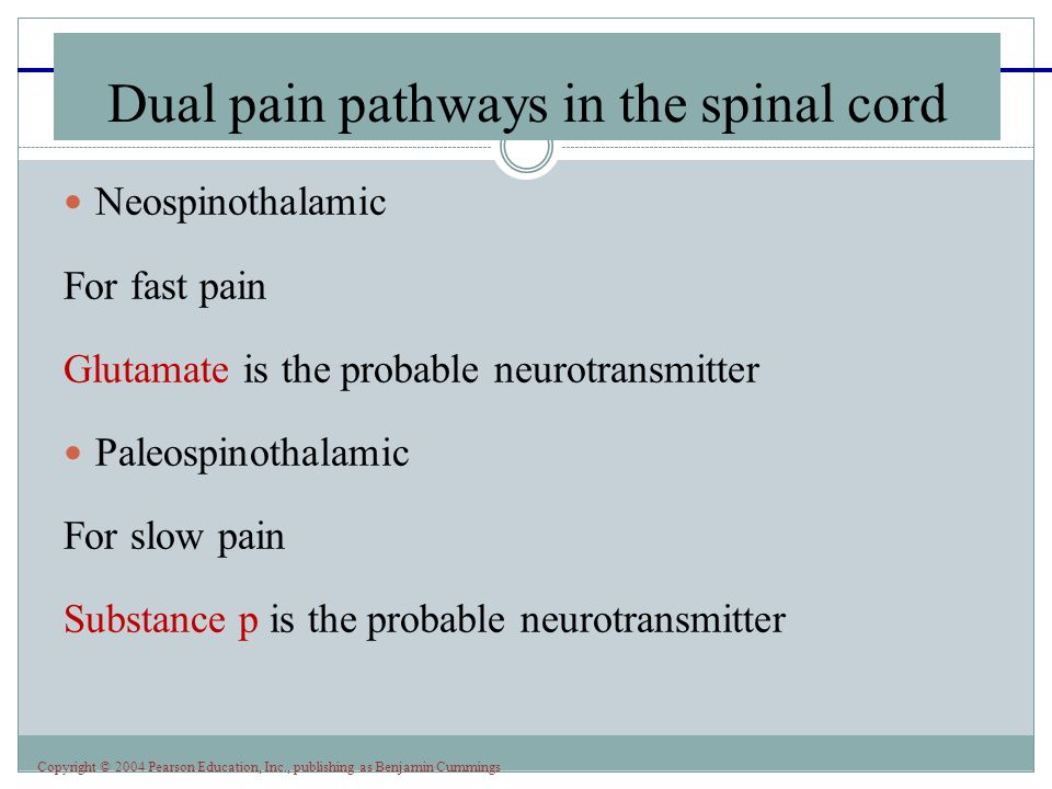 Dual pain pathways in the spinal cord