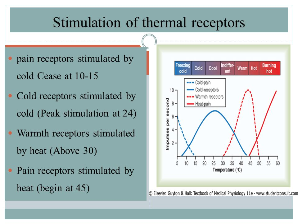 Stimulation of thermal receptors