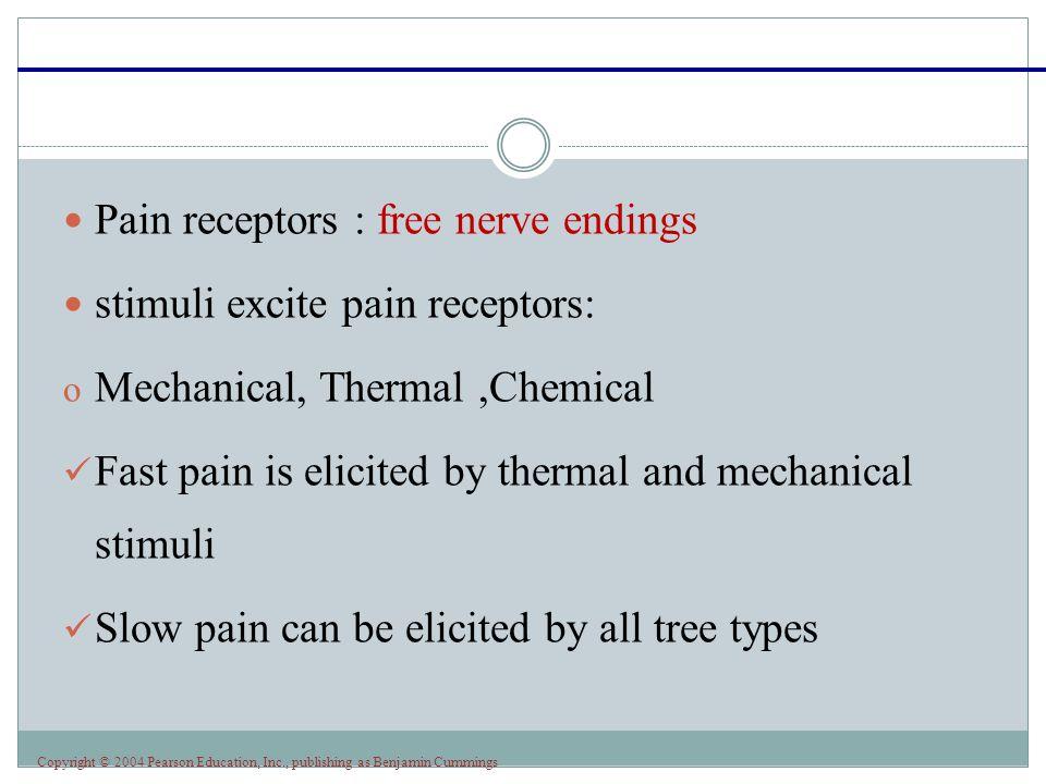 Pain receptors : free nerve endings