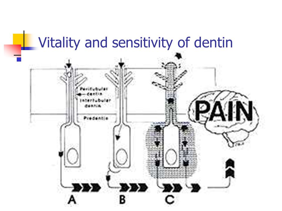 Vitality and sensitivity of dentin