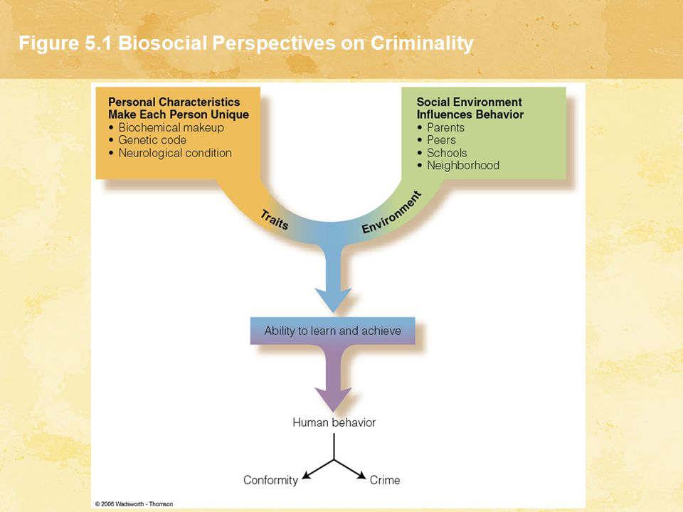 Figure 5.1 Biosocial Perspectives on Criminality