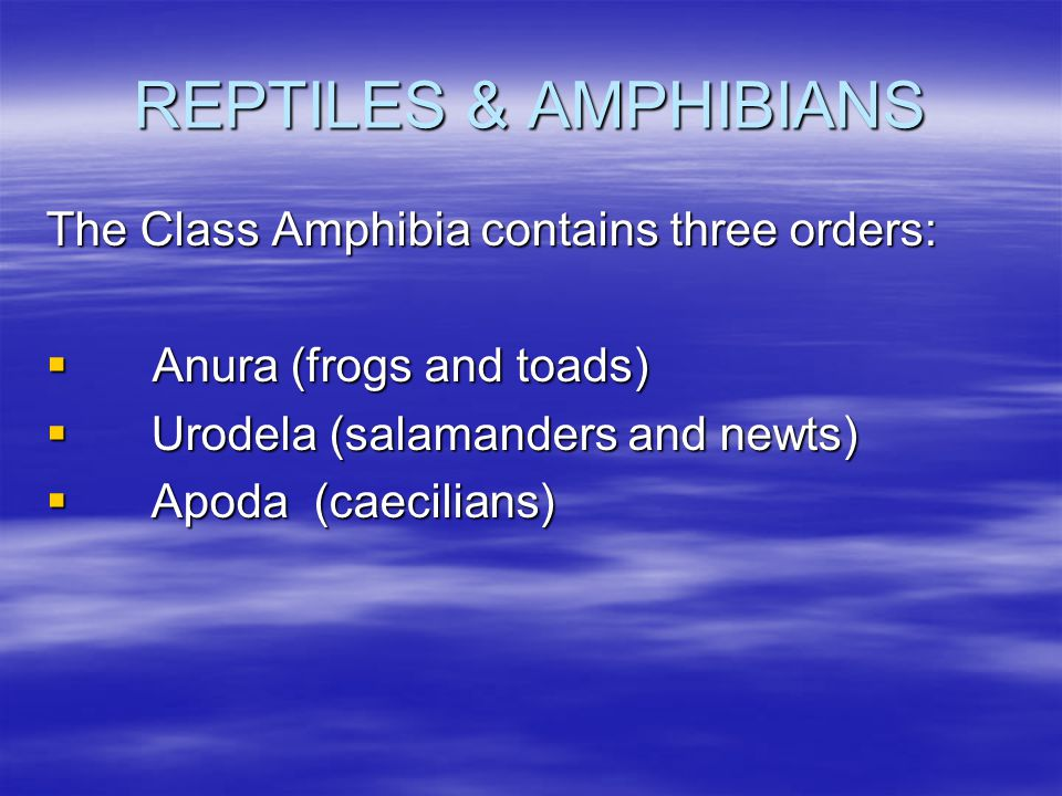 REPTILES & AMPHIBIANS The Class Amphibia contains three orders: