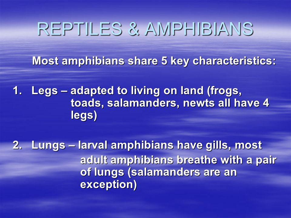 REPTILES & AMPHIBIANS Most amphibians share 5 key characteristics: