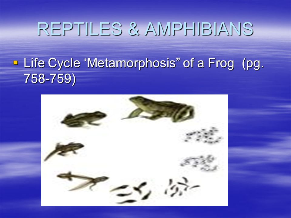 REPTILES & AMPHIBIANS Life Cycle 'Metamorphosis of a Frog (pg. 758-759)