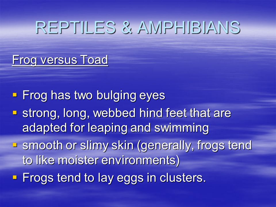 REPTILES & AMPHIBIANS Frog versus Toad Frog has two bulging eyes