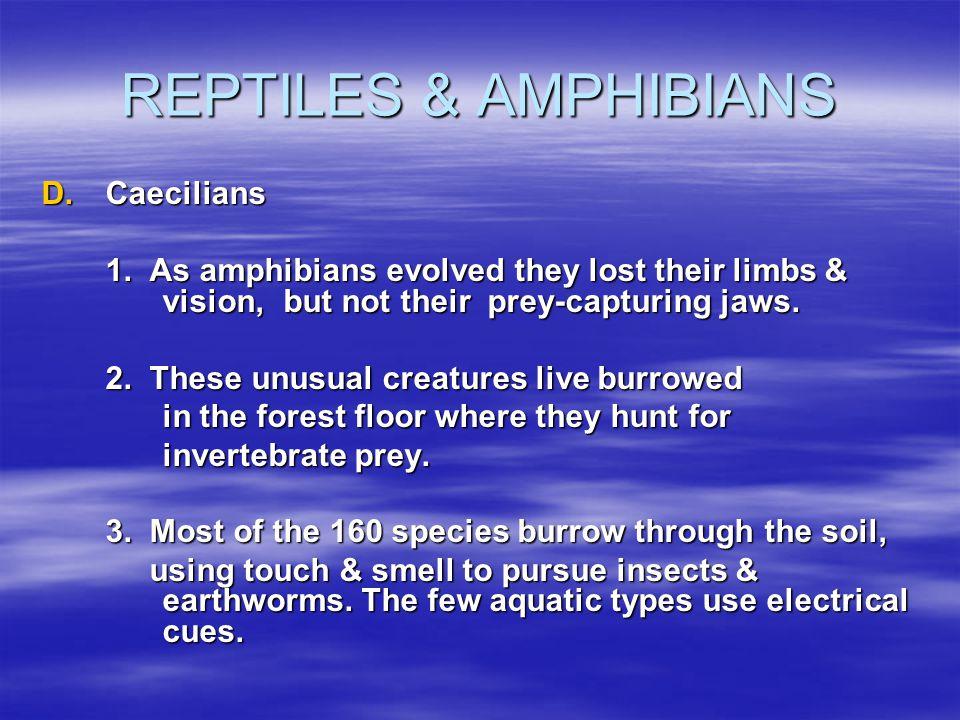 REPTILES & AMPHIBIANS Caecilians
